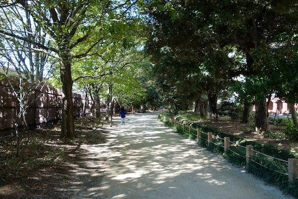 タダで楽しんじゃう新宿御苑の木漏れ日。最近の朝の日課